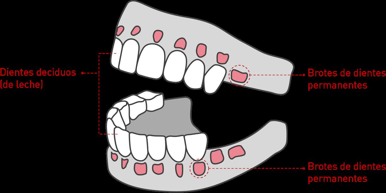 Salud oral infantil